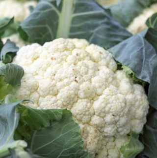 Cauliflower Purée – A Recipe for an Elegant Base for Meat or Fish